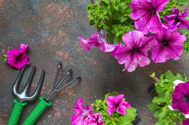 木製の背景にバスケット、麦わら帽子、ガーデンツールのペチュニアの花。 Premium写真