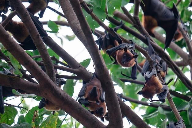 Летучая мышь висит на дереве Premium Фотографии