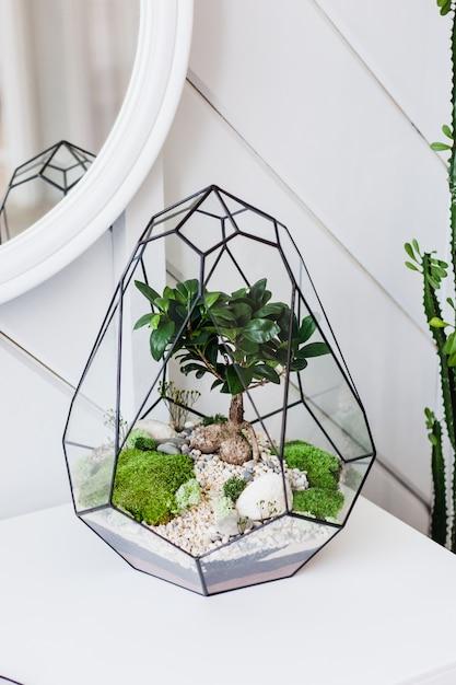 Флорариум - композиция из суккулентов, камня, песка и стекла, элемент интерьера, домашний декор, стеклянный террариум Premium Фотографии