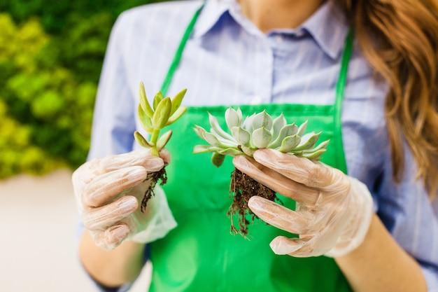 植物や室内装飾用のガラス型、砂、土、多肉植物、サボテン、植物、少女植物 Premium写真