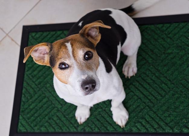 Собака сидит на дверной коврик Premium Фотографии