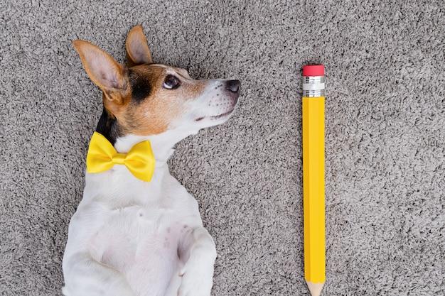 大きな黄色のペンと黄色の結ばれた弓を持つ犬 Premium写真