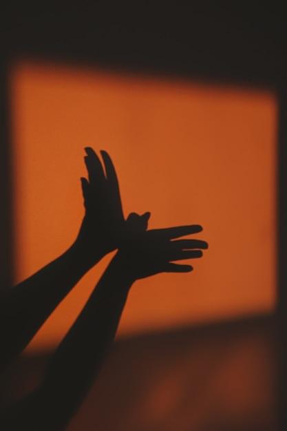 壁に太陽光線から鳥の抽象的な影シルエット Premium写真