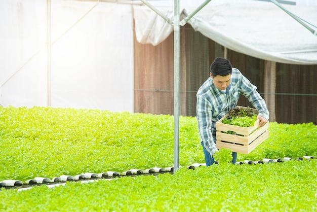 温室の水耕農場で働くアジアの農夫男 Premium写真