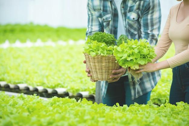 男と女の手が温室水耕栽培農場でグリーンレタスのバスケットを保持します。 Premium写真