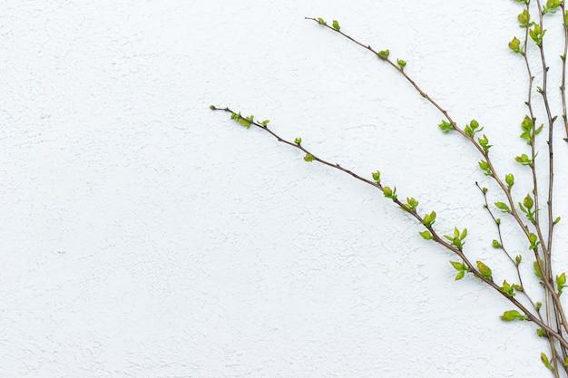光の若い葉を小枝します。 Premium写真