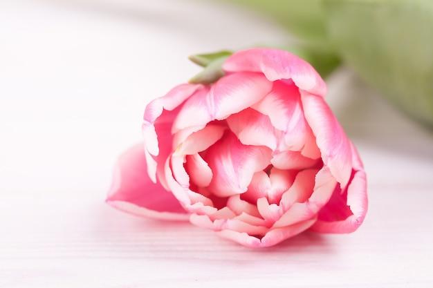 Нежные розовые тюльпаны на белом деревянном Premium Фотографии