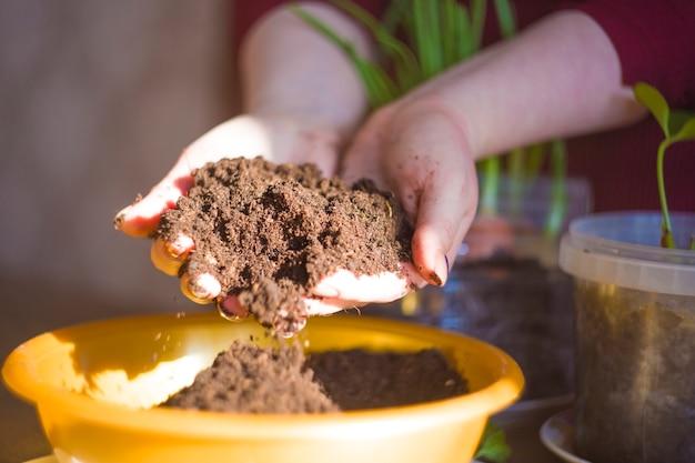有機農作物を育てます。玉ねぎを植えます。 Premium写真