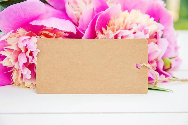 Цветы пионы на белом фоне. выборочный фокус. Premium Фотографии