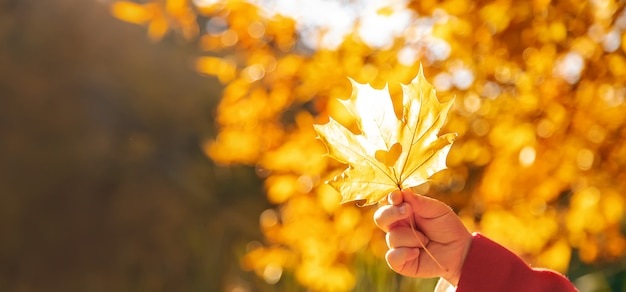 美しい秋の葉。黄金の秋。選択フォーカス。 Premium写真