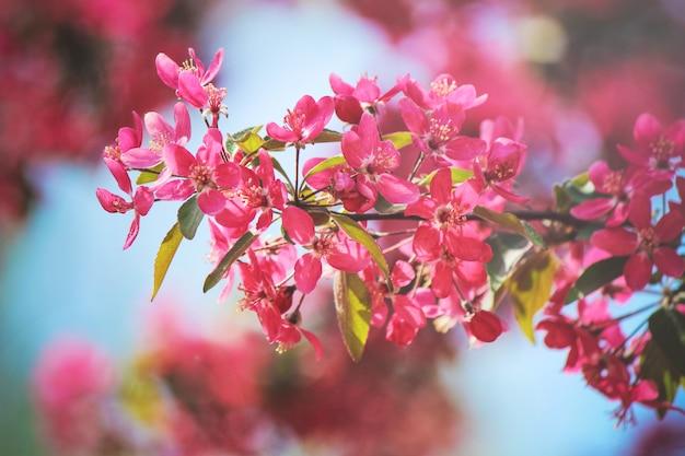 Весеннее цветение деревьев. цветущий сад. выборочный фокус природы Premium Фотографии