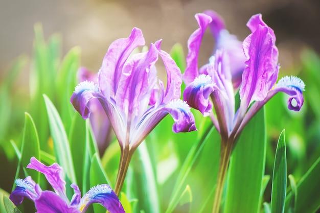 Много фотографий цветов. коллаж. выборочный фокус Premium Фотографии