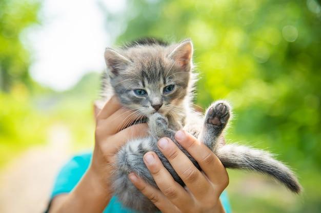子供たちの手の中の小さな子猫 Premium写真