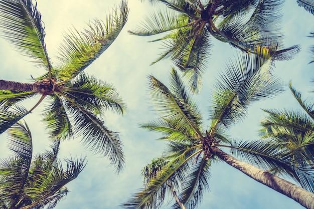 Кокосовая пальма Бесплатные Фотографии