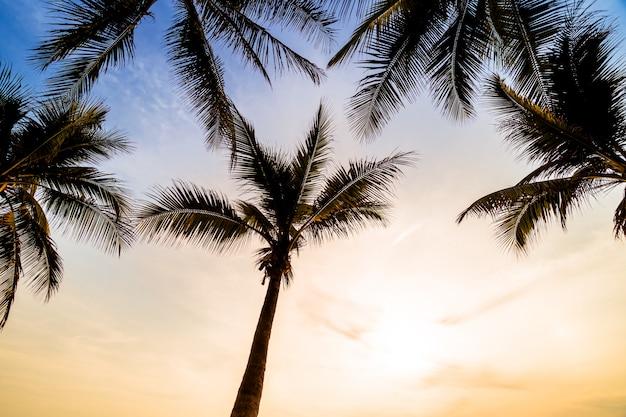 ビーチと海のヤシの木 無料写真