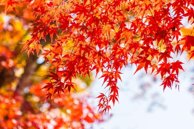 木の美しい赤と緑のカエデの葉 無料写真