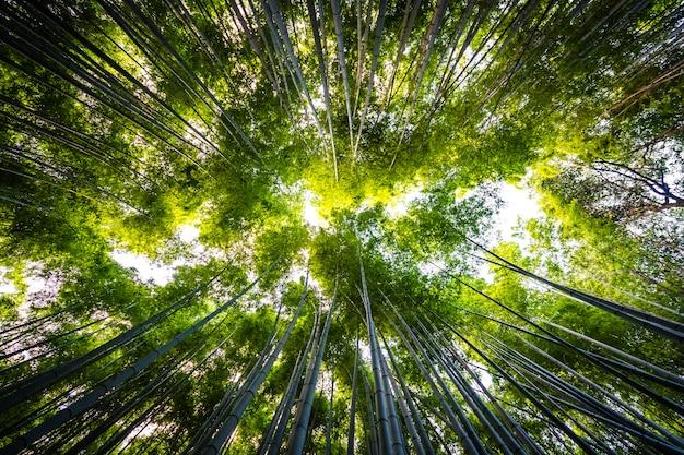 嵐山京都の森の竹林の美しい風景 無料写真