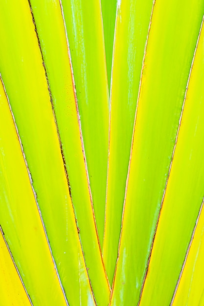 Красивые зеленые банановые листья текстуры для фона Бесплатные Фотографии
