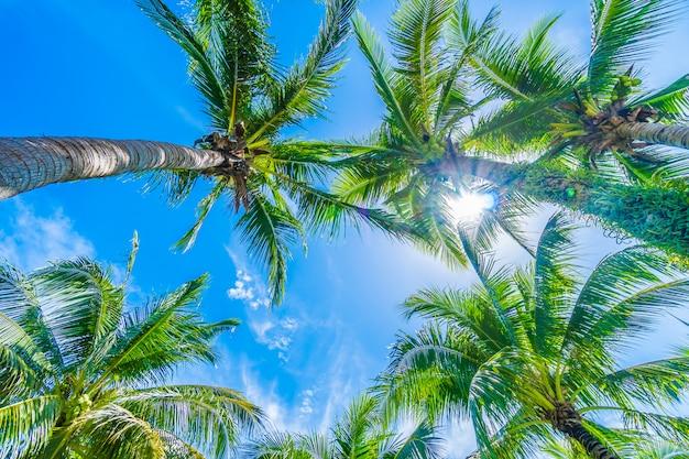 青い空にココヤシの木 無料写真