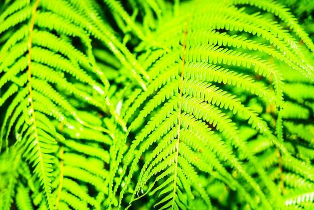 シダの葉 無料写真