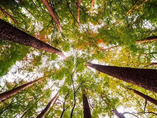 低い天使の眺めの森の大きな木の美しい風景 無料写真