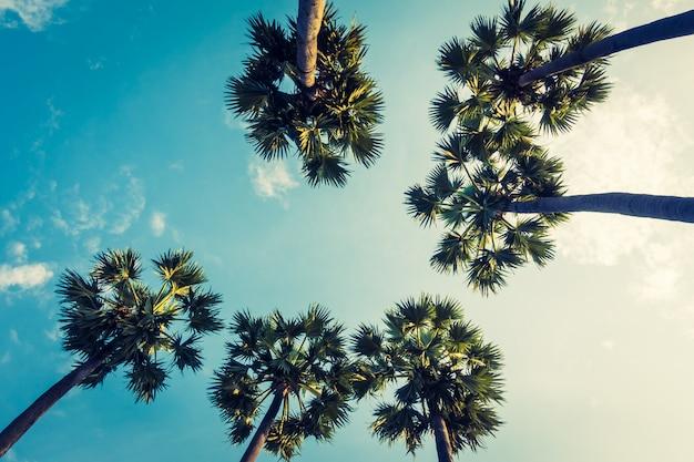 Красивая пальма на голубом небе Бесплатные Фотографии