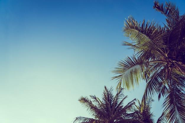 青い空を背景に低角度の美しいココナッツ椰子の木 無料写真