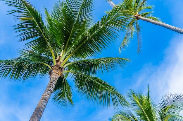 青い空に美しいココヤシの木 無料写真