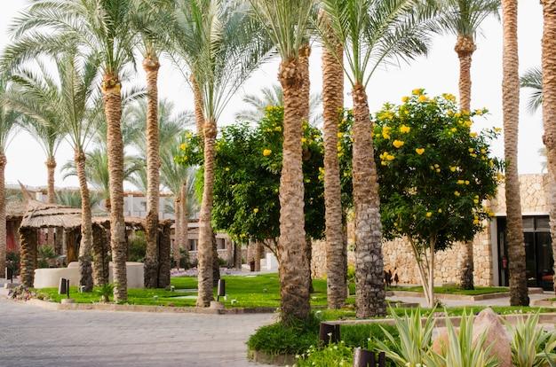 ヤシの木とサボテンの手入れの行き届いた公園エリア。 Premium写真