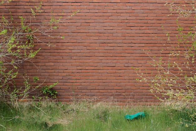 自然の壁 無料写真