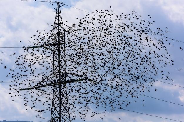 飛んでいる鳥。ムクドリ飛行と高電圧電気タワーのチーム。 Premium写真