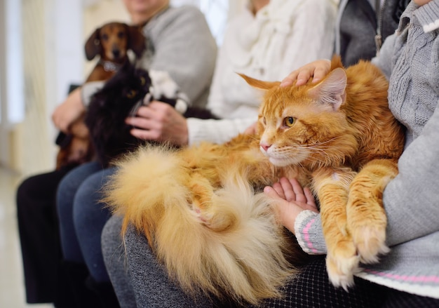 ペットを飼っている人は獣医クリニックで診察を待っています。動物の健康 Premium写真