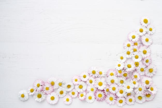 白い木製の背景にデイジーの花。 Premium写真