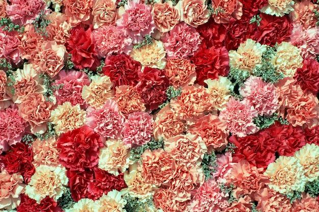 Красочная предпосылка цветков гвоздики. Premium Фотографии