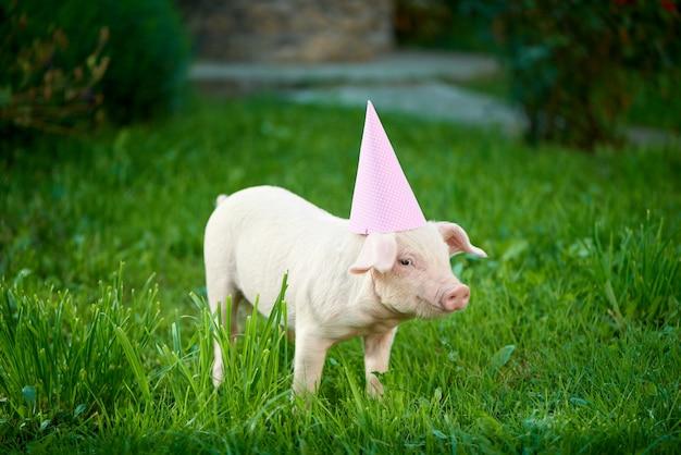 緑の草の上にピンクのお祝いキャップ立ってかわいい貯金箱。 Premium写真