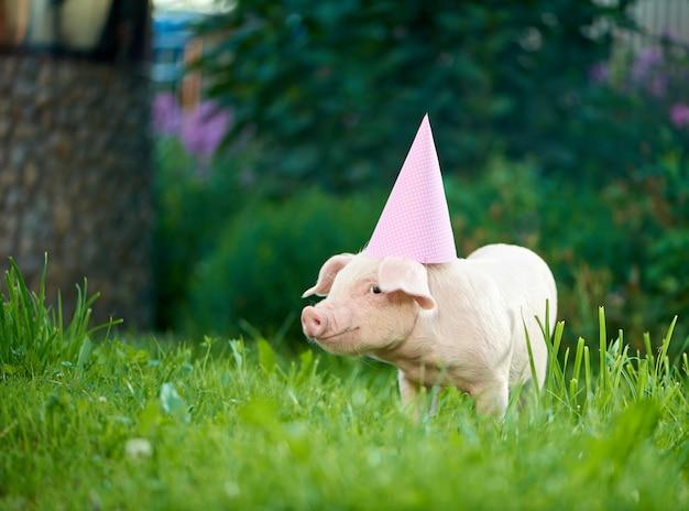 ピンクのお祝いキャップを着て緑の芝生の庭で貯金箱に立っています。 Premium写真