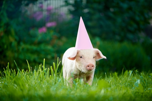 緑の芝生の中で庭に立って、カメラにポーズをとって小さなピンクの貯金箱。 Premium写真
