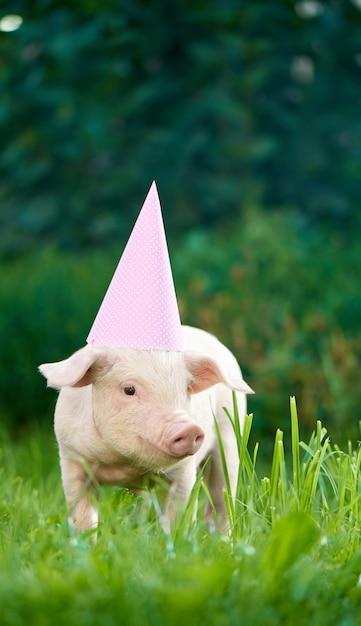 ピンクのお祝いキャップを着て緑の芝生の庭に立っている貯金箱の肖像画。 Premium写真