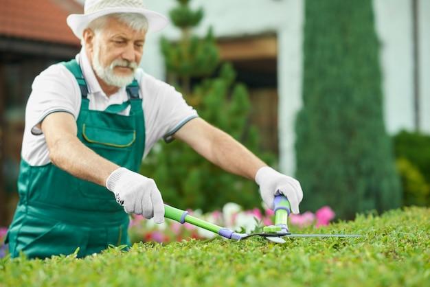 素敵な庭で緑の茂みを切る年配の男性のクローズアップ。 Premium写真