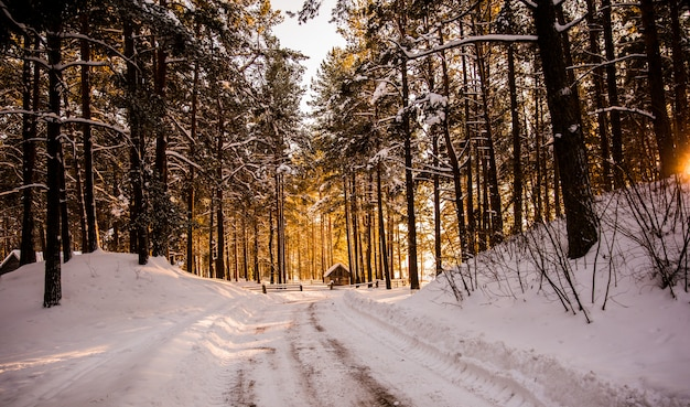 森の中の冬の道 Premium写真