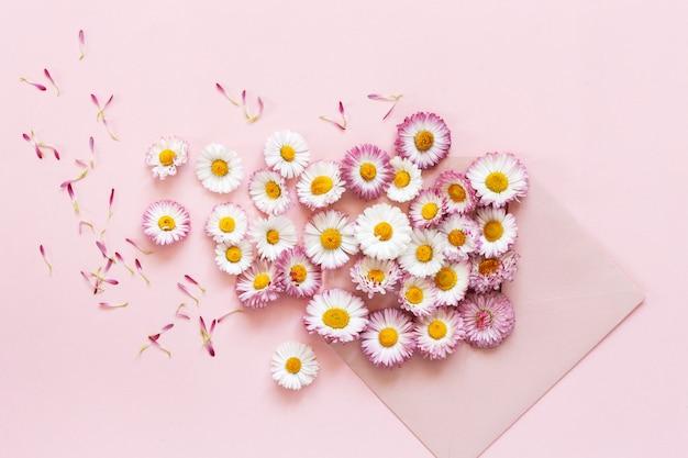 Ромашки в розовом конверте на розовом фоне бумаги. вид сверху, крупный план Premium Фотографии