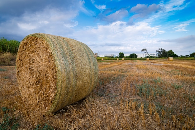 Тюки соломы в поле на закате Premium Фотографии