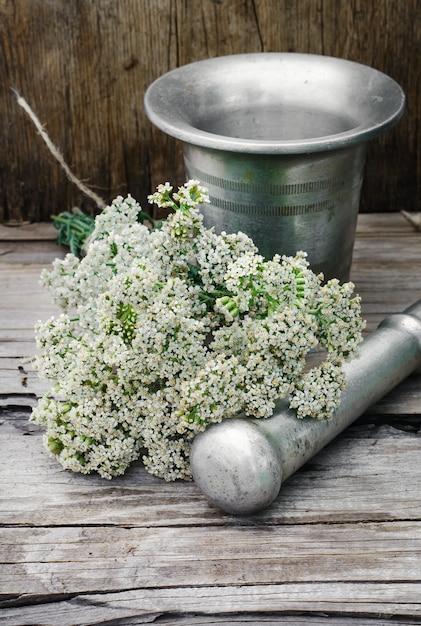 Буш лекарственное растение Premium Фотографии