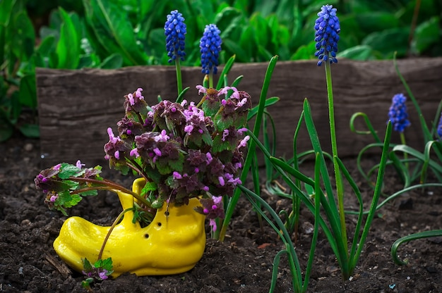 鉢の観賞用の花のお手入れ Premium写真