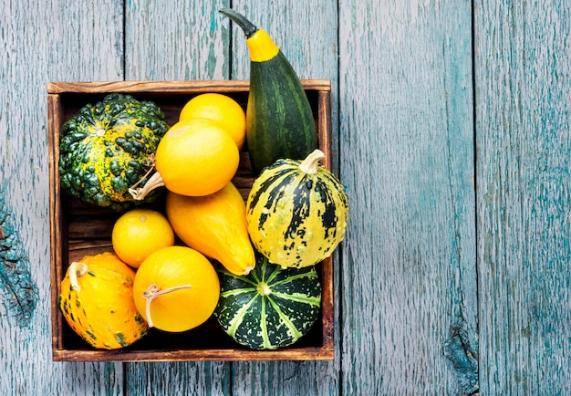 カボチャの秋の静物 Premium写真