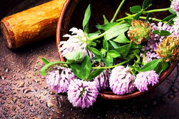 癒しの植物クローバー Premium写真