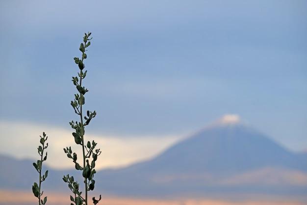 チリのサンペドロデアタカマにあるリカンカブール火山がぼやけた雪で覆われた砂漠の植物 Premium写真
