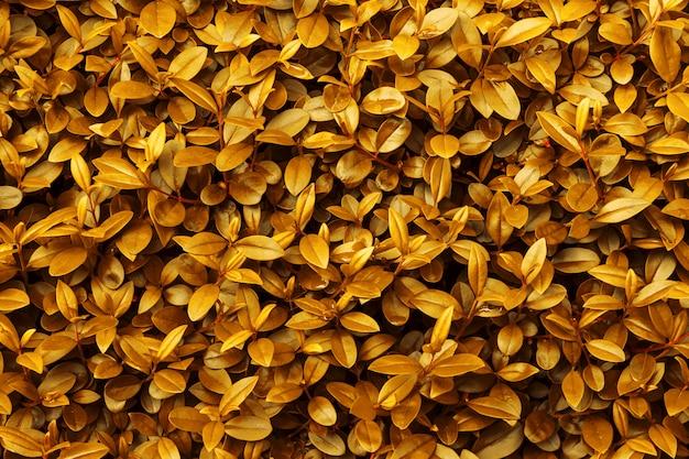 秋の秋の背景黄色オレンジ色の黄金色の葉のパターンの壁紙 Premium写真