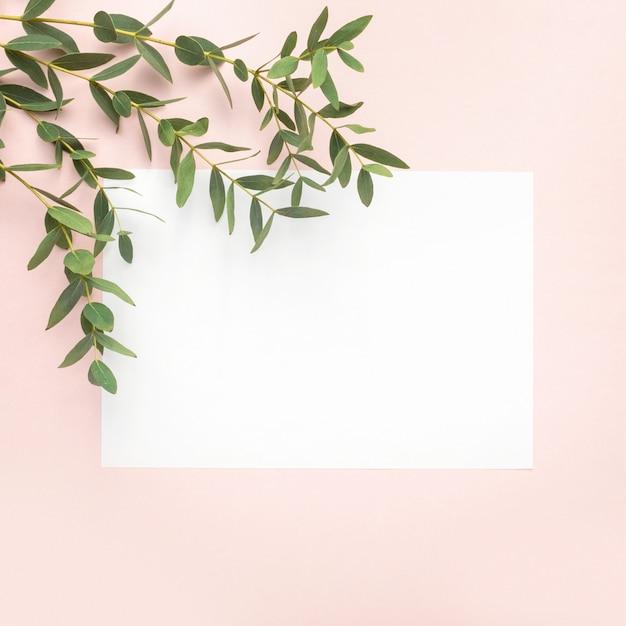 紙の空白、パステル調のピンクの背景にユーカリの枝。フラット、トップビュー、コピースペース Premium写真