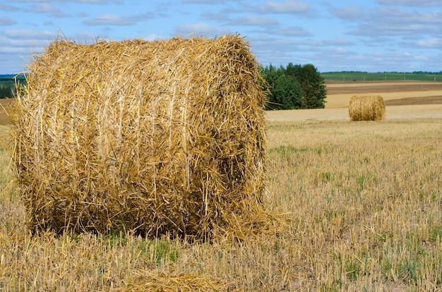 干し草ベール青い空と農村風景。牧草地でわらを収穫 Premium写真